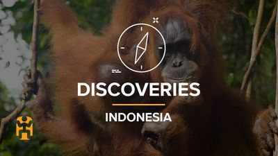 Indonesia Discoveries