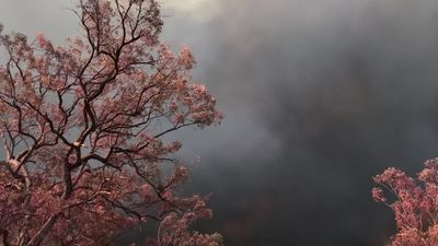 RAW: Foliage turned pink against smoke-filled sky