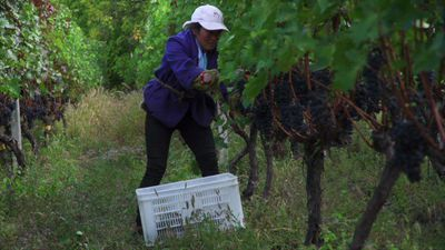 In China's Himalayas wine is flying high