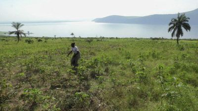 DR Congo: vast agricultural potential remains largely untapped