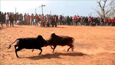 Nepalis watch bullfighting festival