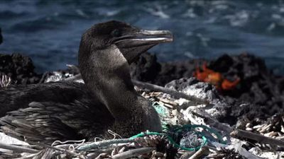 Water day: plastic threatens life in Galapagos