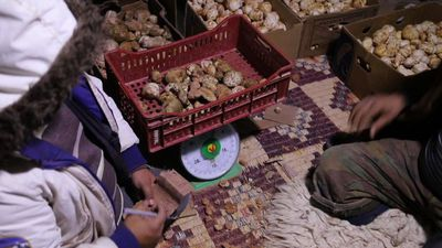Searching for 'white gold' in Libya