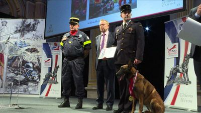 'Hero dogs' win prizes for rescue, detection exploits