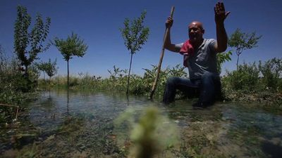 A slow road to recovery for East Ghouta's farmlands