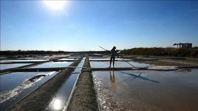 Salt harvest gets underway in France's Guerande region