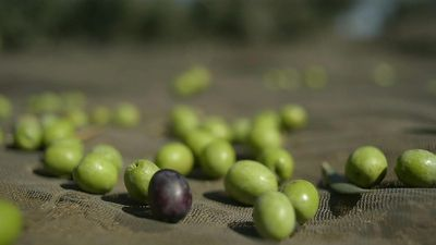 Spanish olive industry concerned over impending US tariffs