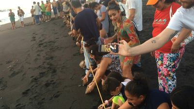 Locals and tourists in Guatemala release baby turtles into wild