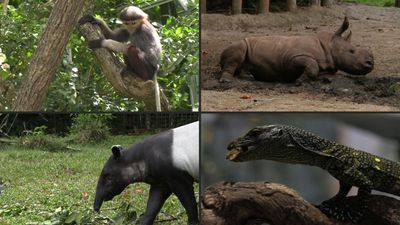 Singapore wildlife reserve showcases baby animals