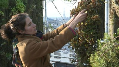 Paris is experiencing a boom in urban agriculture