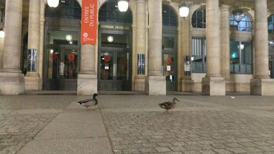 Paris ducks enjoy a night out as lockdown keeps humans indoors
