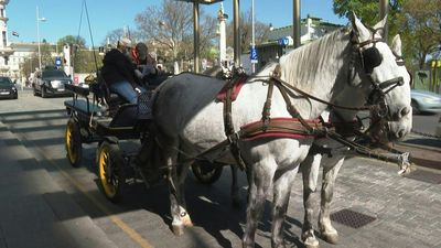 Seniors get horse-drawn carriage food deliveries in Vienna neighbourhood