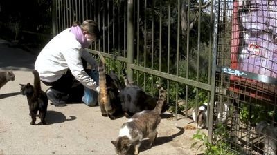 Greece: Strays feel the bite as pandemic spreads