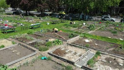 "'People have rediscovered their roots"": Montreal's community gardens reopen"