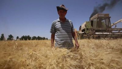 Syria harvest boom brings hope as hunger spikes