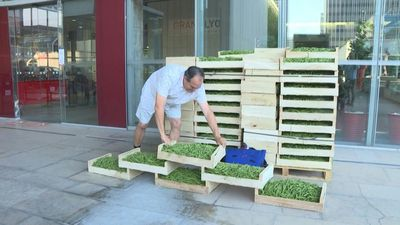 Agriculture activist offers 2 tons of organic green beans to city hall employees in Lyon