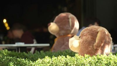Kosovo cafe uses toy bears for distancing as virus measures return