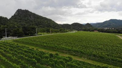 One vine day: Sisters produce award-winning wine in tropical Thailand