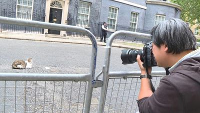 International Cat Day: the art of photographing Larry, the beloved Downing Street cat