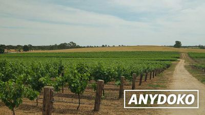 Australian Adventurer - Two Days In The Barossa Valley