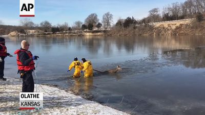 Deer rescued from icy Kansas lake
