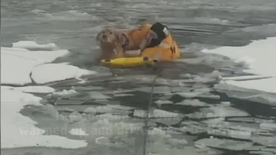 Montana firefighters rescue dog from icy river