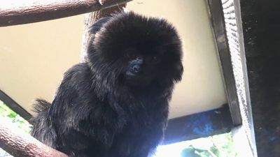 Police search for monkey stolen from a Florida Zoo
