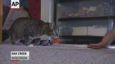 Wisconsin students make disabled cat new legs