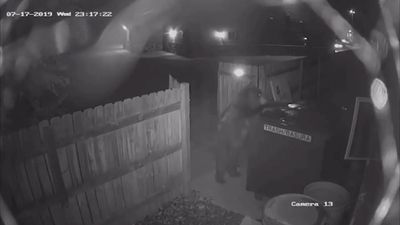 Video captures bear dumpster heist