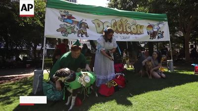 DoggyCon: pop culture convention for furry friends