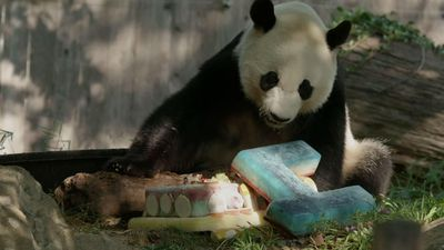 Giant Panda Bei Bei celebrates 4th birthday