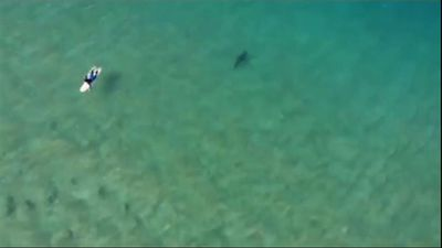 Surfer avoids shark after alert from drone user