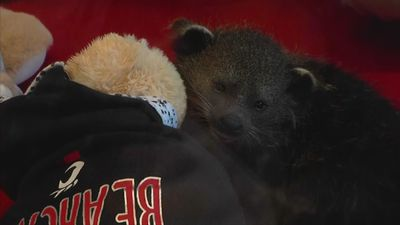 Baby bearcat Univ. of Cincinnati's next mascot