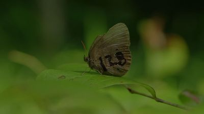 What Can Be Saved? Bomb range helps rare butterfly