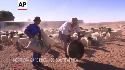 Farmers in South Africa struggling due to drought