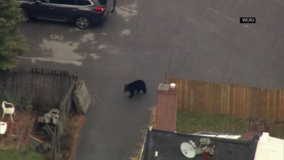 Bear causes uproar in Delaware