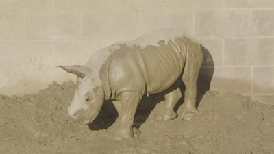 San Diego Zoo welcomes baby rhino