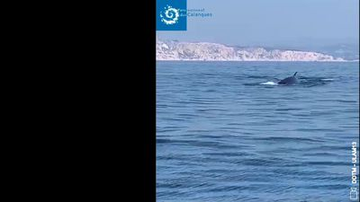 Rare whale sighting during France lockdown