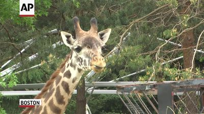 Boston zoo reopens after losing $3M in shutdown