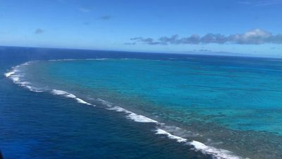 Aggressive seaweed smothering Pacific reefs