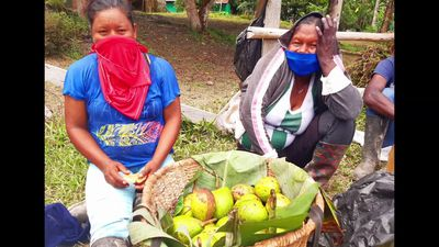Farmers trade fruits for essentials in the Amazon