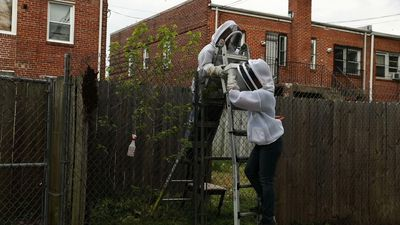 Washington, D.C. beekeepers are essential workers