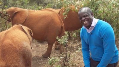 Elephant interrupts BBC reporter in mid-flow