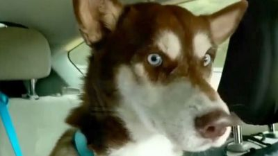 Wandering dog home after 2,200-mile adventure