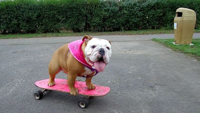 Dog teaches herself to skateboard