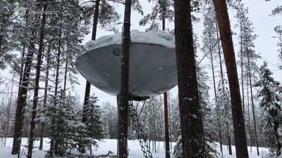 8 tree houses that are out of this world