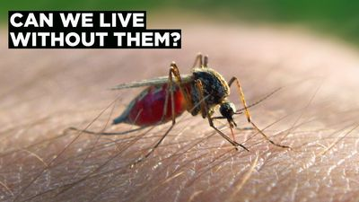 Google's Plan to Rid the World of Mosquitoes