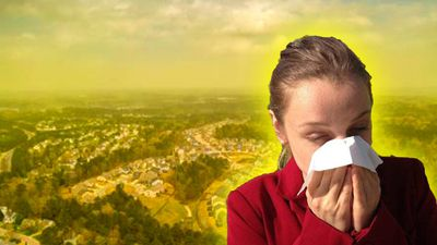 How Humans Caused Our Own Allergies