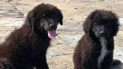 Puppies rescued from Manitoba island will 'come around': Worker