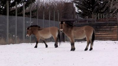 Calgary Zoo conservation centre aims to prevent extinction